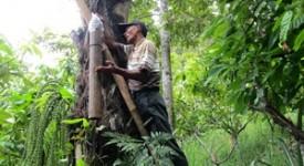 Usaha Lestari Hutan tanpa Legalisasi