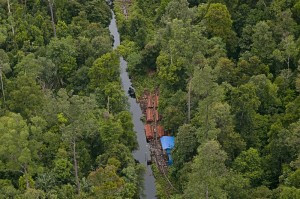 Conserving forests: An aerial picture taken by a joint police-military patrol shows piles of woods from alleged illegal logging in Giam Siak Kecil-Bukit Batu, a biosphere reserve in Bengkalis, Riau, on Feb. 24. (Antara/FB Anggoro)