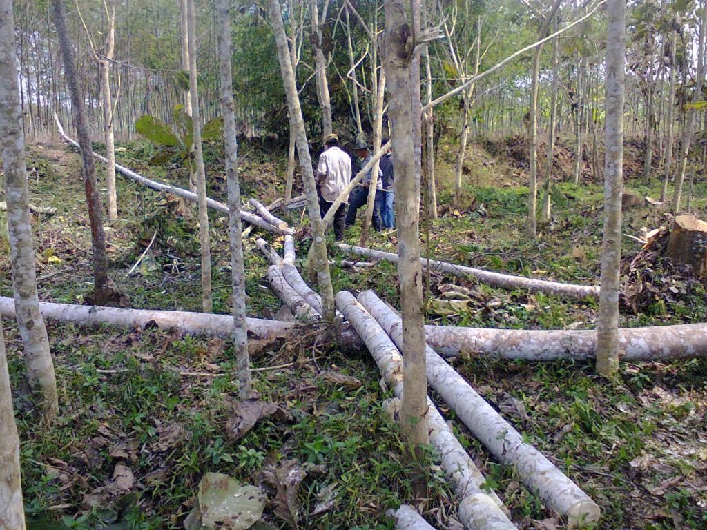 Tebang hutan