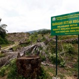 Mukim Tuntut Hak Kelola Hutan Adat
