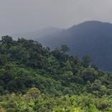 Aceh Benteng Terakhir Hutan di Sumatera