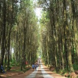 Ministry Claims Social Forestry Program on Track