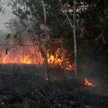 Potensi Kebakaran Hutan Makin Luas