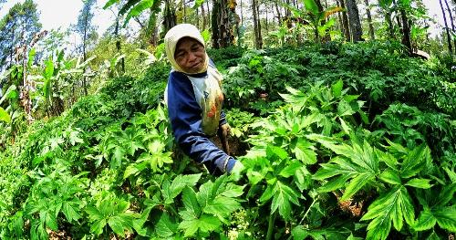pengelolaan hutan