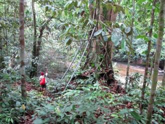 Hutan Sosial di Kalbar : Swasta Agar Dilibatkan