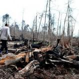 Komitmen Gubernur dari Indonesia Ditagih : Butuh Regulasi Daerah untuk Menekan Deforestasi