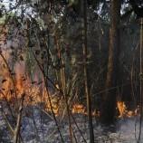 Tim Darat dan Udara Padamkan Api