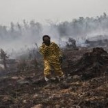 Hujan Buatan di Kalteng : Lahan Gambut di Kalbar Terbakar Lagi