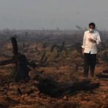 Perpres Penyelesaian Penguasaan Hutan Terbit