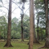Social forestry program goals not achievable, say NGOs