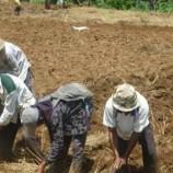 Pemerintah Dorong Konsolidasi Lahan Pertanian
