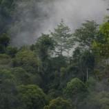 Perlu Terobosan untuk Realisasikan Hutan Adat