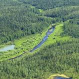1,3 Juta Ha Hutan Telah Diakses Rakyat secara Legal