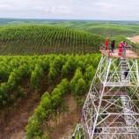 APP Akui Belum Optimal Melindungi Hutan