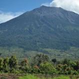Indonesia Dukung 30% Tutupan Hutan di 2030