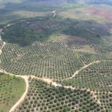 Eksploitasi Hutan Pesat pada Tahun Politik