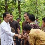 KLHK Lepas 977.824 ha Kawasan Hutan