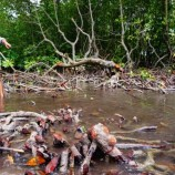Kekayaan Ekosistem Pesisir Terabaikan