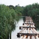 800 Batang Kayu Bulat Disita di Mantangai