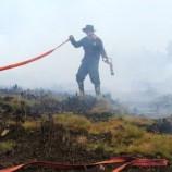 Penanganan Kebakaran Hutan dan Lahan Belum Maksimal