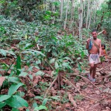 Tambang Liar Bayangi Kelestarian Hutan Adat