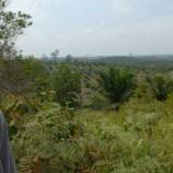 Aturan Adat Masuk Skema Pelestarian Hutan