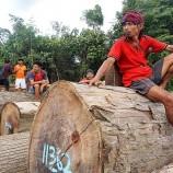 Spirit Batang Garing di antara Deforestasi