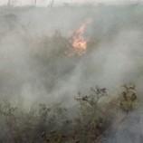 Lahan Gambut terbakar di Aceh Barat