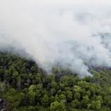 Ratusan Hektar Gambut di Kalbar Terbakar