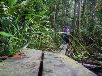 Titik Balik Hutan Gambut di Punggualas