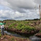 Restorasi Gambut Papua Fokus Revitalisasi Ekonomi