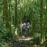 Masa Depan Hutan Adat