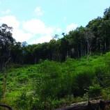 Presiden Permanenkan Moratorium Hutan