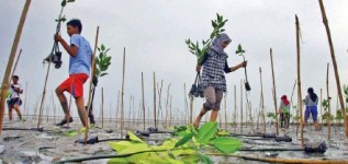 Imagine Indonesia with restored forests, mangroves