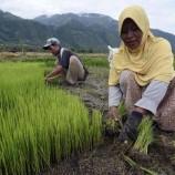 Tiga Tahun Reforma Agraria